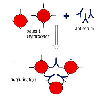 types of agglutination tests pdf