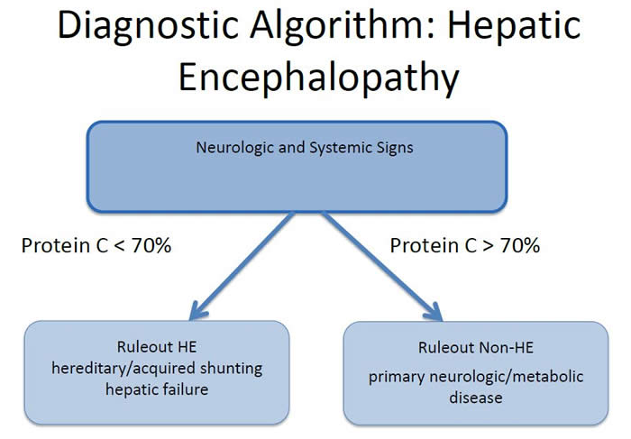 Diagnostic Algorithm: Hepatic Encephalopathy