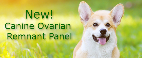 Canine Ovarian Remnant Panel