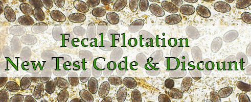 Fecal Floatation Test