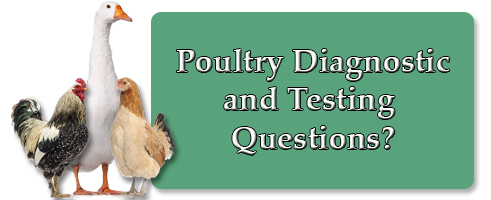 Poultry Questions?
