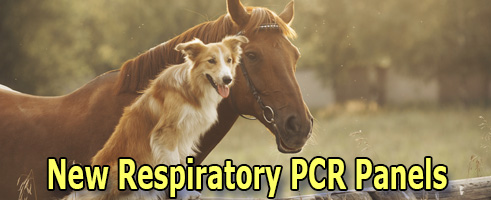 New Respiratory PCR Panels